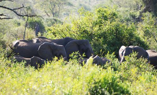 HluHluwe Safari